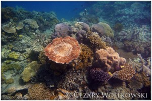 Wielka Rafa Koralowa AUSTRALIA