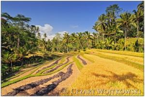 Tarasy ryżowe INDONEZJA