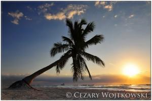 palmy na plaży w Tulum MEKSYK