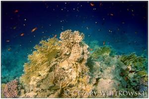 Morze Czerwone EGIPT