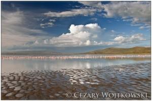 Park Narodowy Jezioro Nakuru KENIA